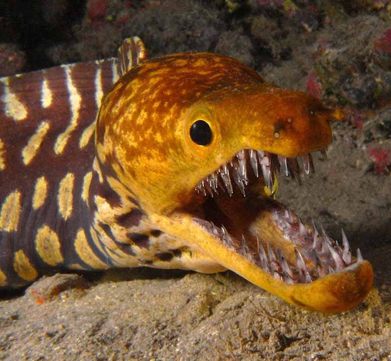 http://www.worldsmostawesome.com/lists/top-8-scariest-fish-in-the-world/mooray_eel.jpg