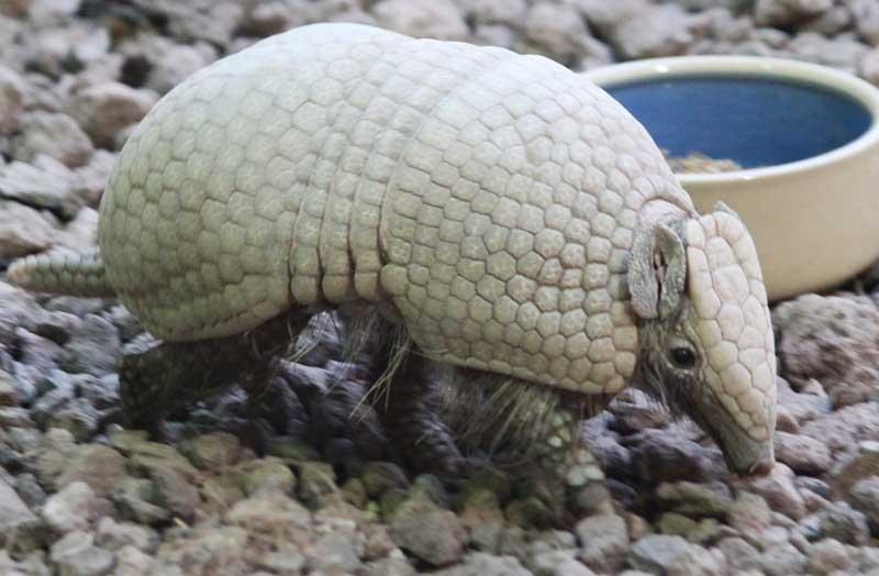 Top Strangest Animals In The World - 25 intelligent animals world