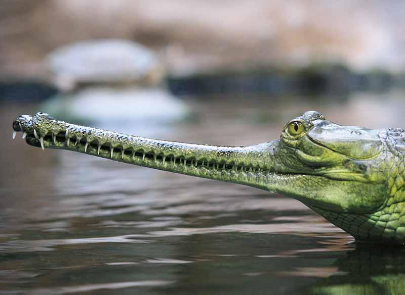 Weirdest Animals In The World Top 25